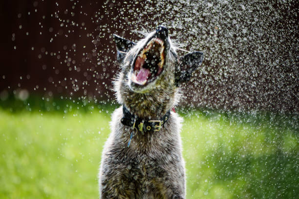 royalty free dog sprinkler pictures images and stock photos istock