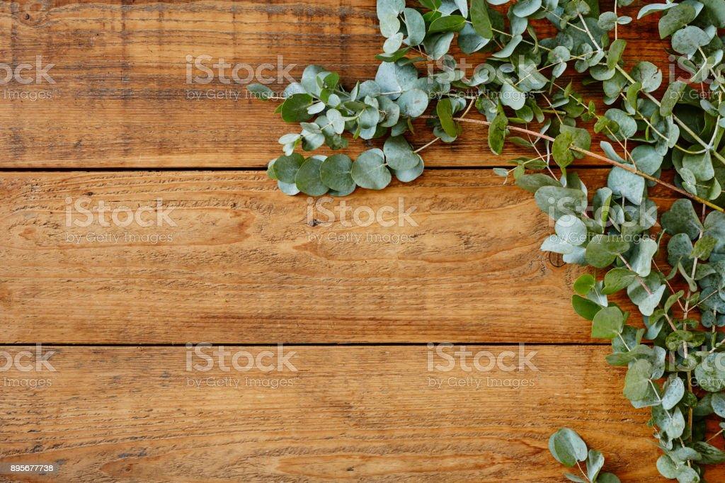 australian eucalyptus on wooden table stock photo