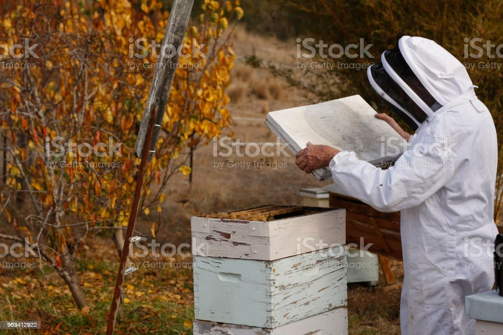 Australian farmer tending his bee hives with his vintage antique smoker on his private farm with homemade bee boxes in rural Australia stock photo