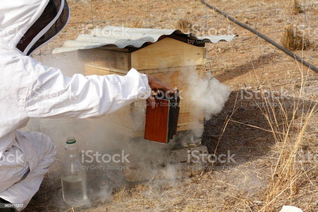 Australiska bonde tenderar hans bikupor med hans vintage antika rökare på sin egen gård med hemmagjord bee lådor i landsbygdens Australien - Royaltyfri Arbeta Bildbanksbilder