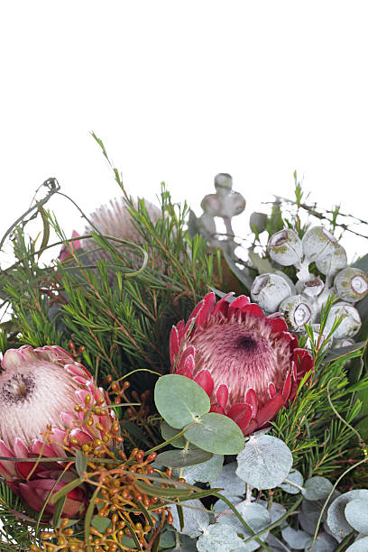 australian blumenstrauß - protea strauß stock-fotos und bilder