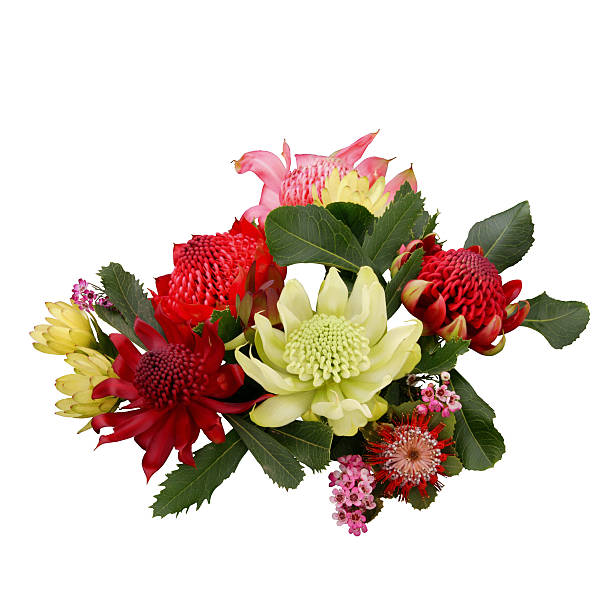 Australian Flowers (Waratah) stock photo
