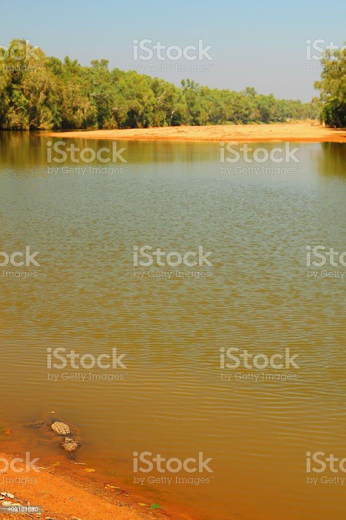 Australian freshwater crocodiles stock photo