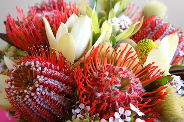 australische heimischen wildblumen - protea strauß stock-fotos und bilder