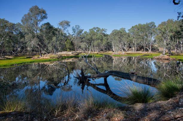 Australischer ökologischer Landbau – Foto