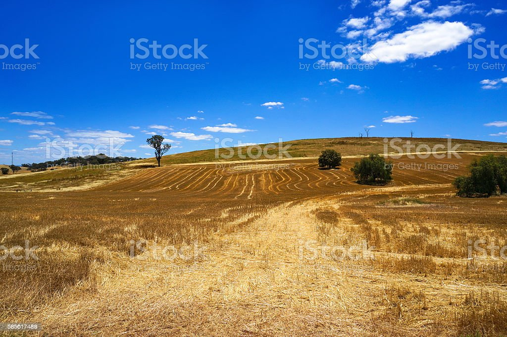 Australian outback field landscape stock photo