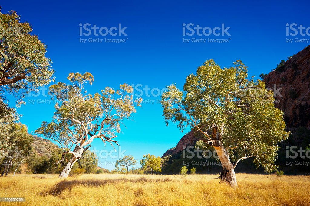 Australian Outback Landscape stock photo