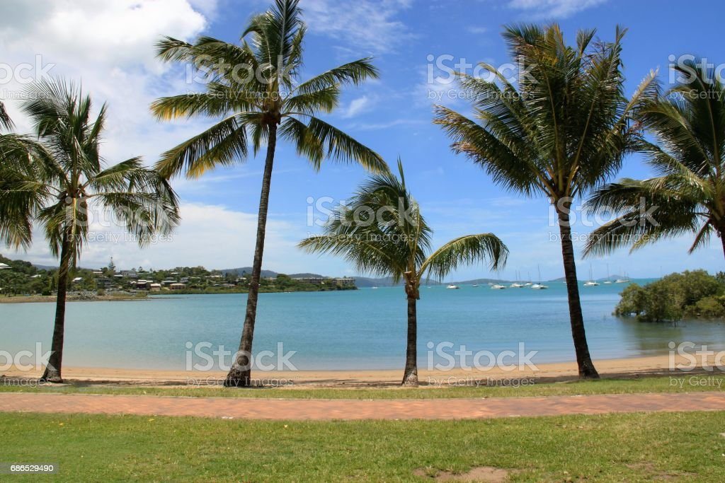 Australian palm beach foto stock royalty-free