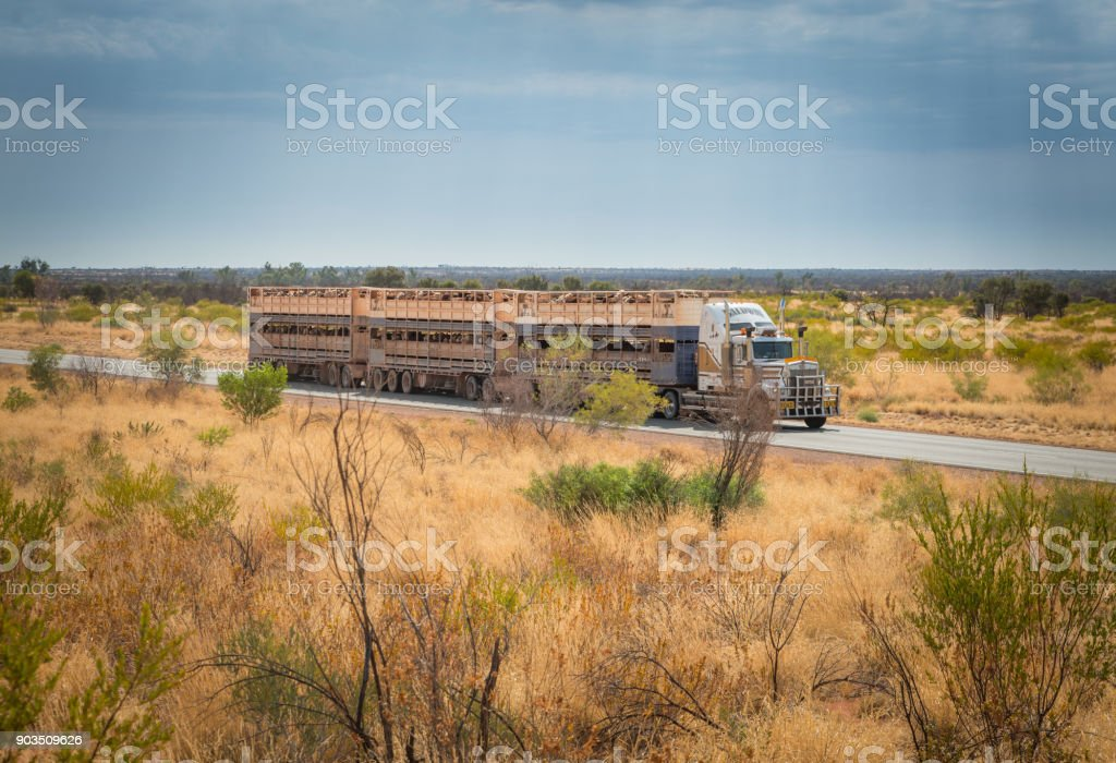 Australian road train driving along Stuart Highway stock photo