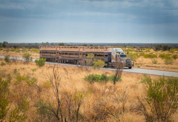 Australian road train driving along Stuart Highway stock photo