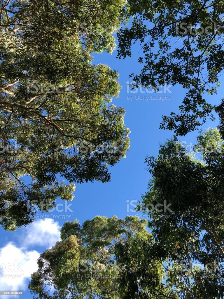 Australian sky with gum trees visible stock photo