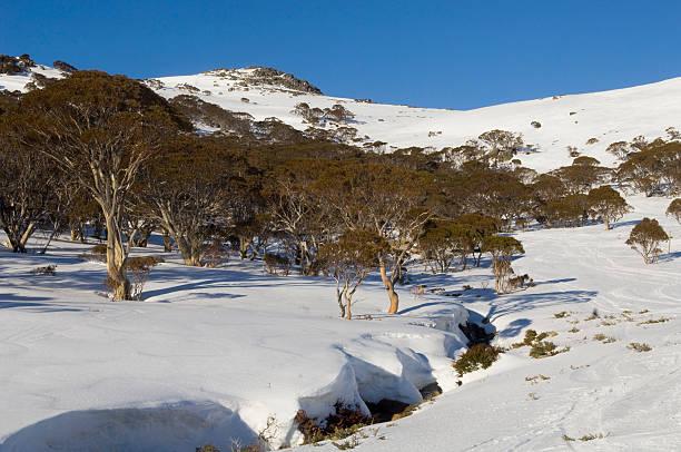 Australian Snow Landscape