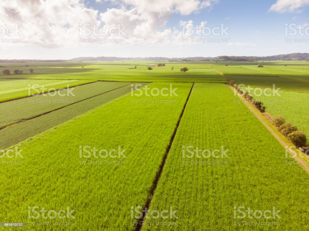 Australian Sugarcane Fields and Landscape stock photo