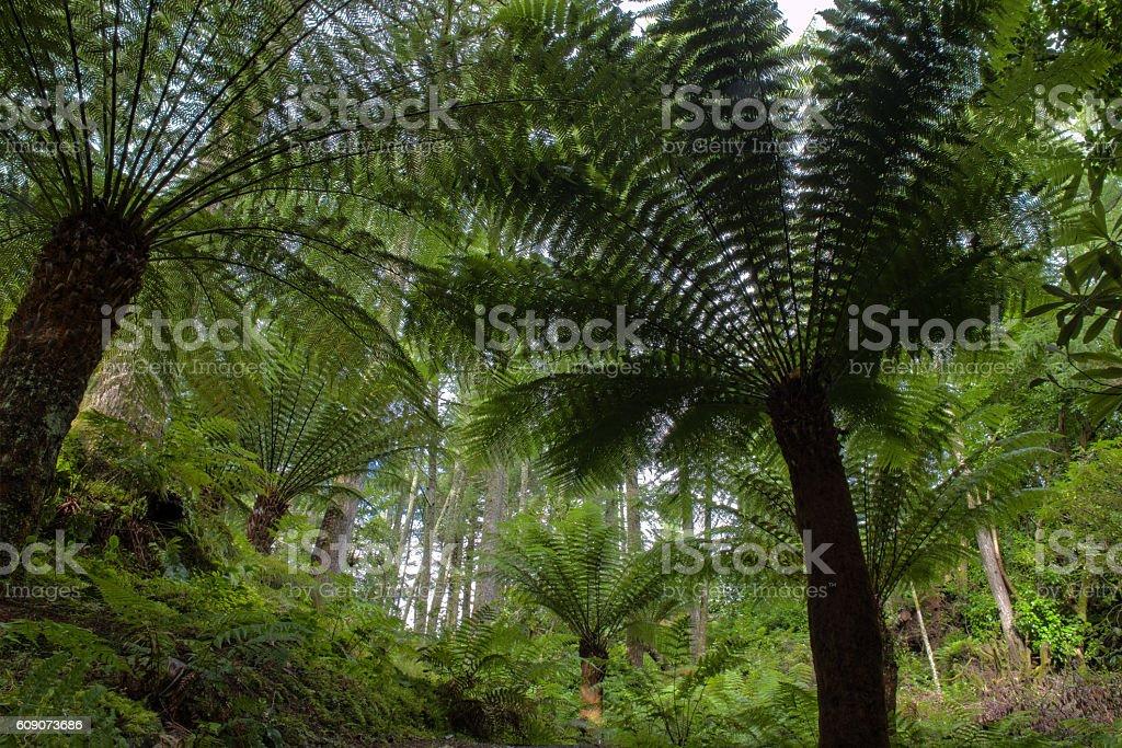 Australian tree fern. stock photo