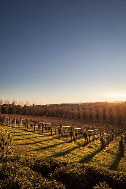 Australian Vineyard Sunset stock photo