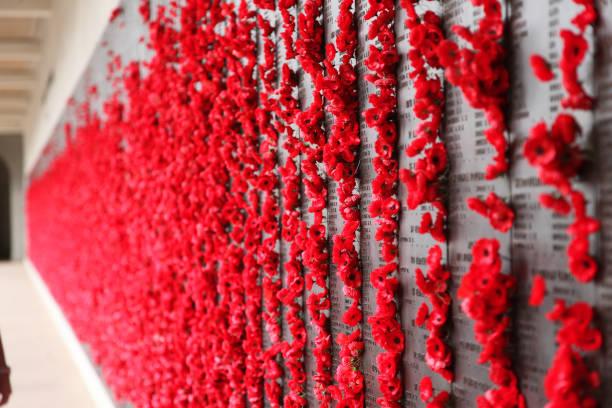 memorial de guerra australiano - papoilas de malha - papoula planta - fotografias e filmes do acervo