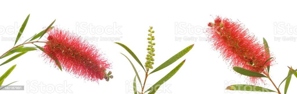 Australian Wild Flowers stock photo