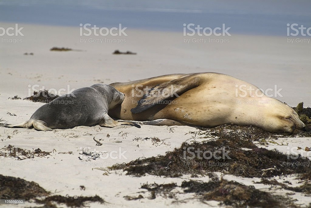 Australia,Zoology stock photo