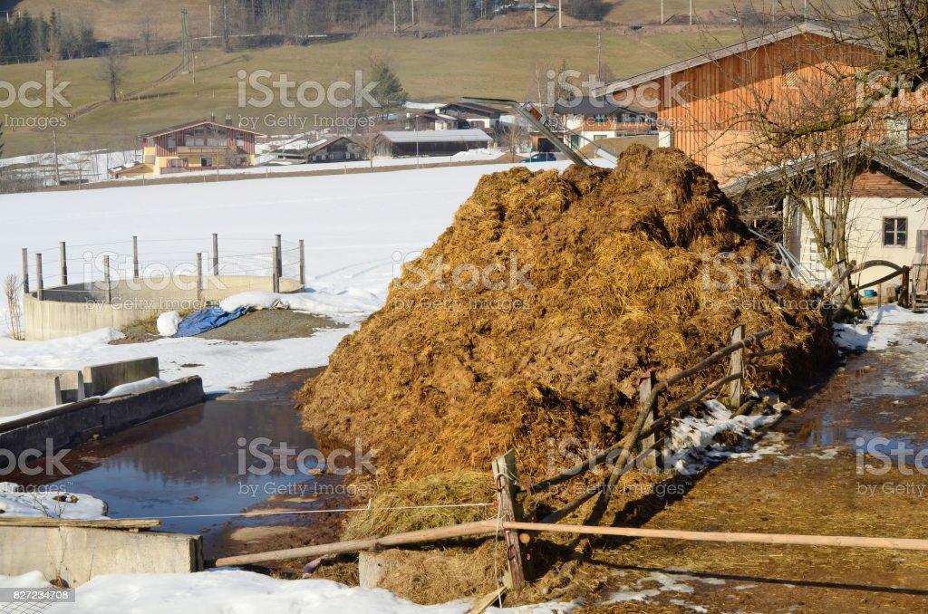 Austria, Agriculture stock photo
