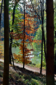 Austria, colorful leaves, an autumn impression in natural preserve Sparbach
