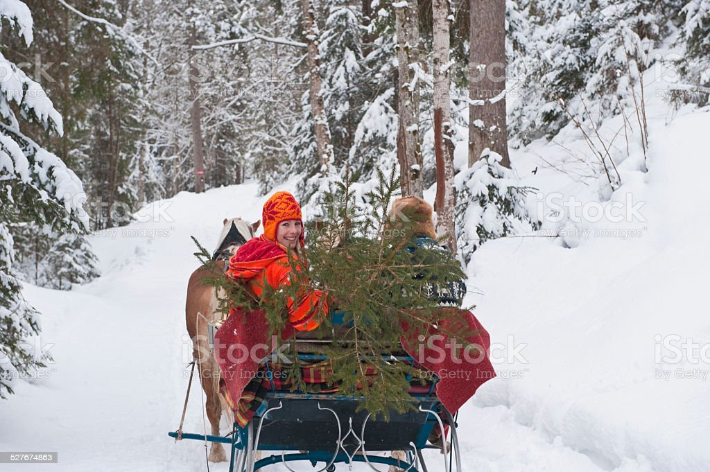 Austria Salzburger Land Couple Transporting Christmas Tree On Sleigh Stock Photo & More Pictures ...