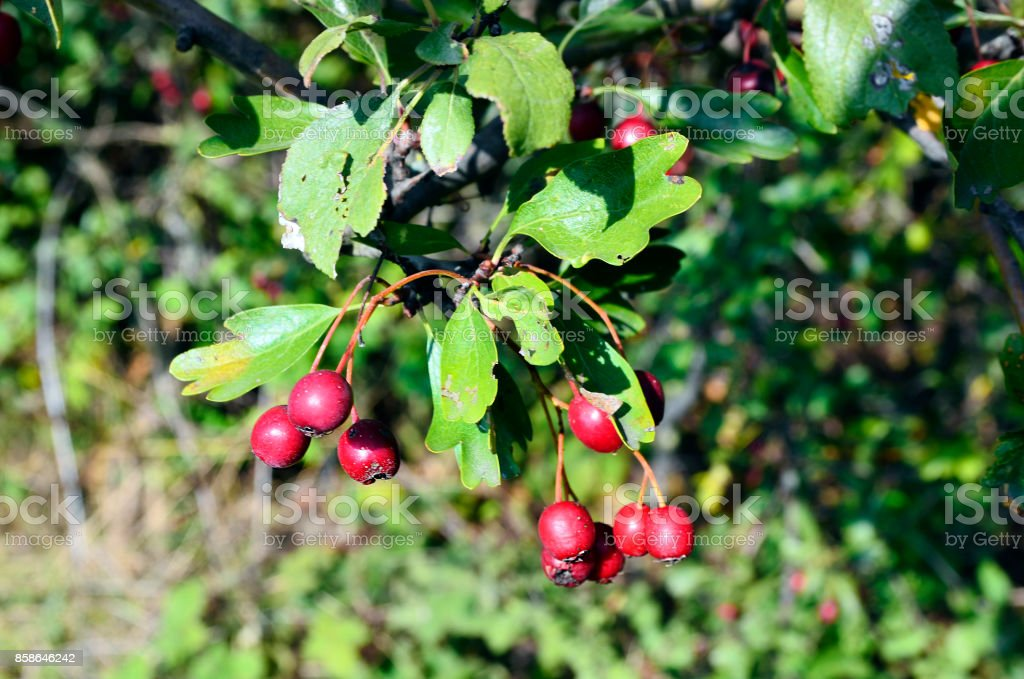 Austria_Botany stock photo