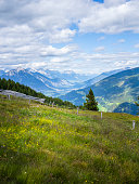 Alpine meadow in the Ötztal Alps in Austria with trees and mountain landscape in the background