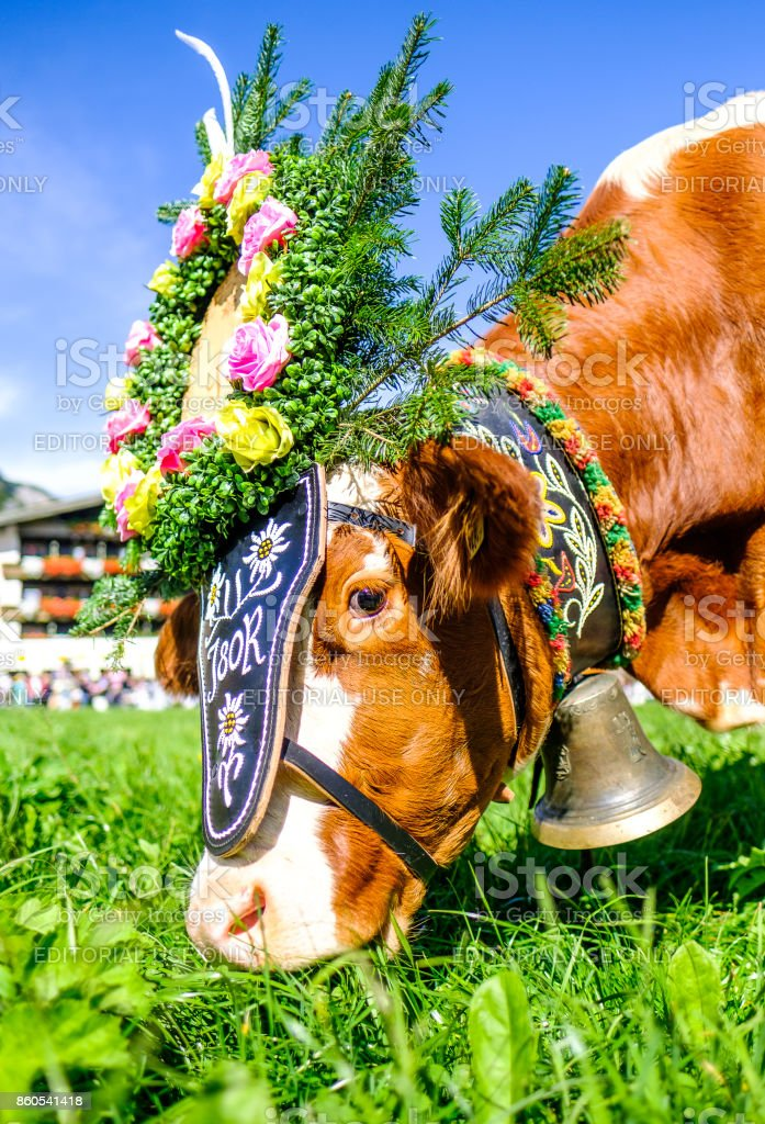 Austrian Almabtrieb in Pertisau stock photo