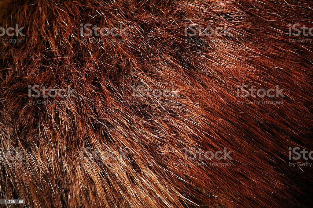 Authentic beaver fur royalty-free stock photo