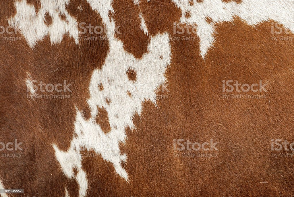 Authentic Cowhide stock photo