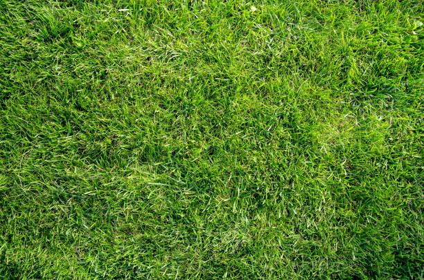 authentique gazon vert naturel sans soudure pelouse plat lay fond - herbe photos et images de collection