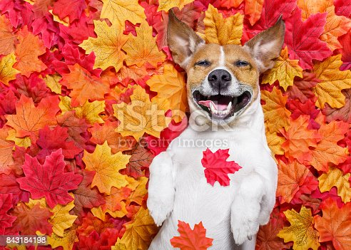 istock autmn fall leaves dog 843184198