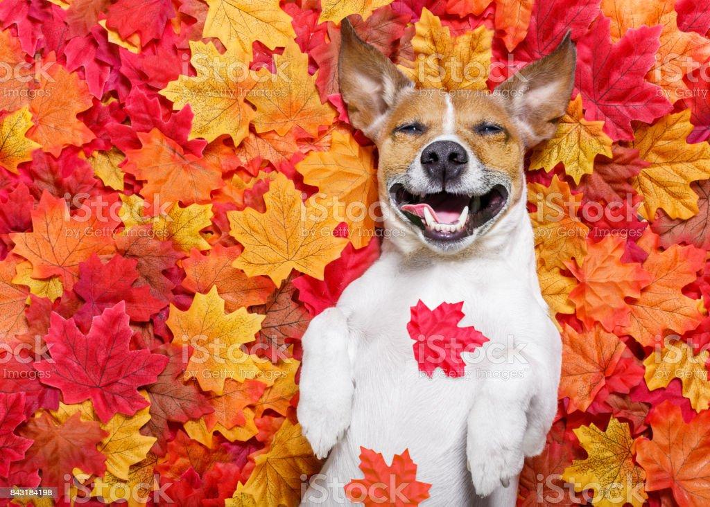Autmn Herbst Blätter Hund – Foto