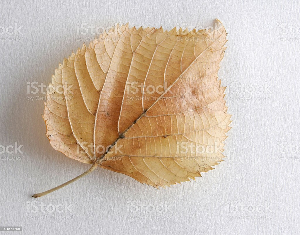 Autmn Leaf royalty-free stock photo