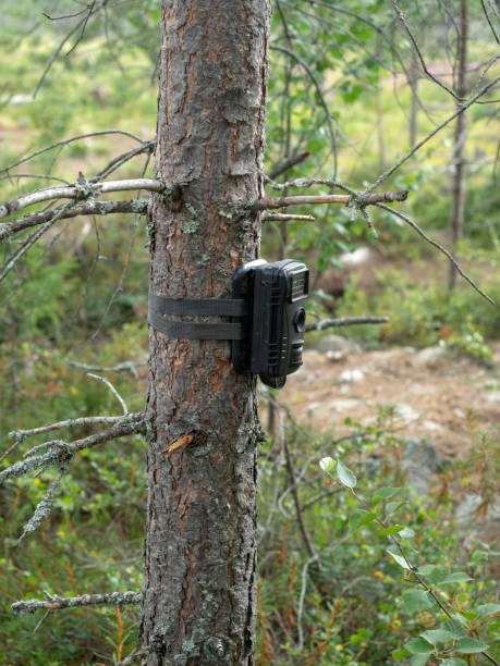 Automatic camera trap attached to a tree stock photo