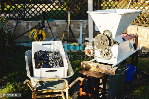 Automatic destemmer crusher machine. Small business concept. Wine Making process. Homemade wine