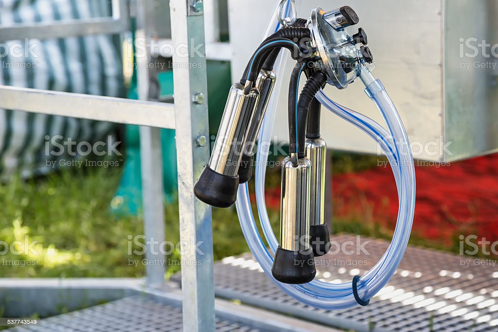 Automatic mechanized milking equipment for farm industry stock photo