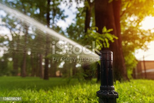 Automatic sprinkler system watering the lawn at sunrise. Close-up. Gardening and law care.