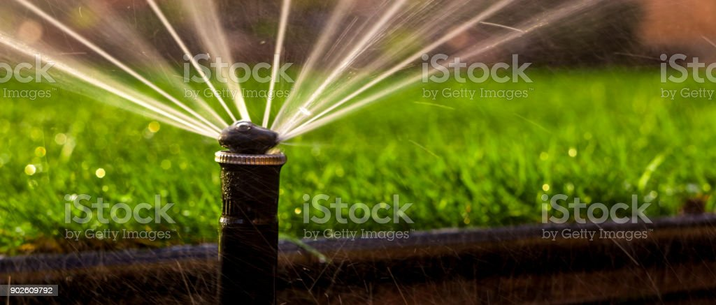 Automatic Sprinkler System Watering The Lawn On A Background