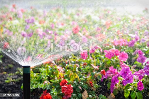 An automatic sprinkler watering a bed of flowers in bright sunshine.  Please note intentionally shallow depth of field.