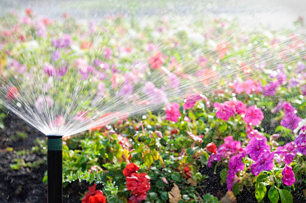 automatic sprinkler watering flowers - watering stock pictures, royalty-free photos & images