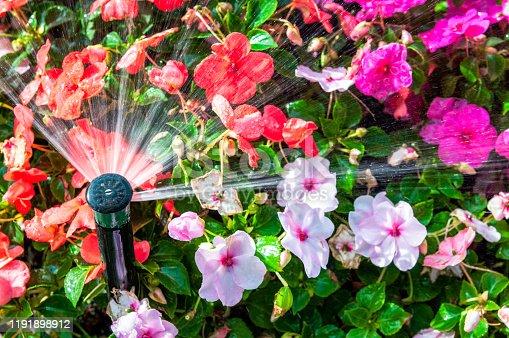 A sprinkler spraying water on flowering summer plants.