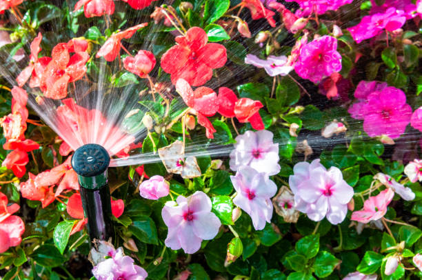 Automatic watering of flowering plants stock photo