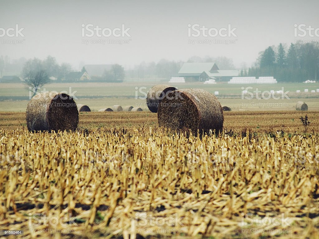 autum field royalty-free stock photo