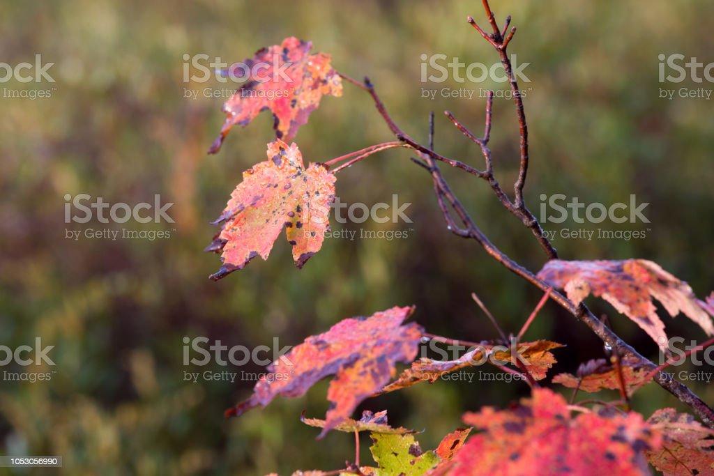 Autum leaf scene stock photo