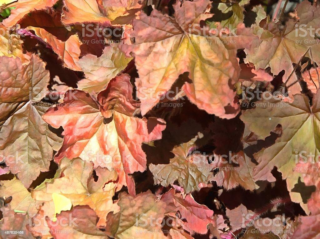 Autum leaves 12 stock photo