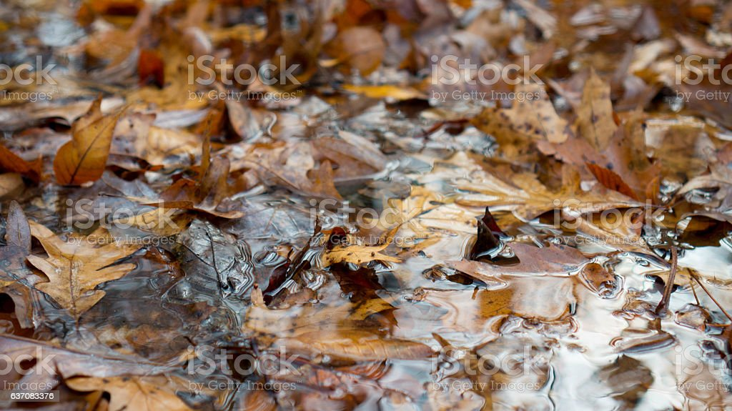 Autum Leaves in Stream Water stock photo