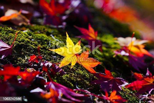 It is the autumn scenery.