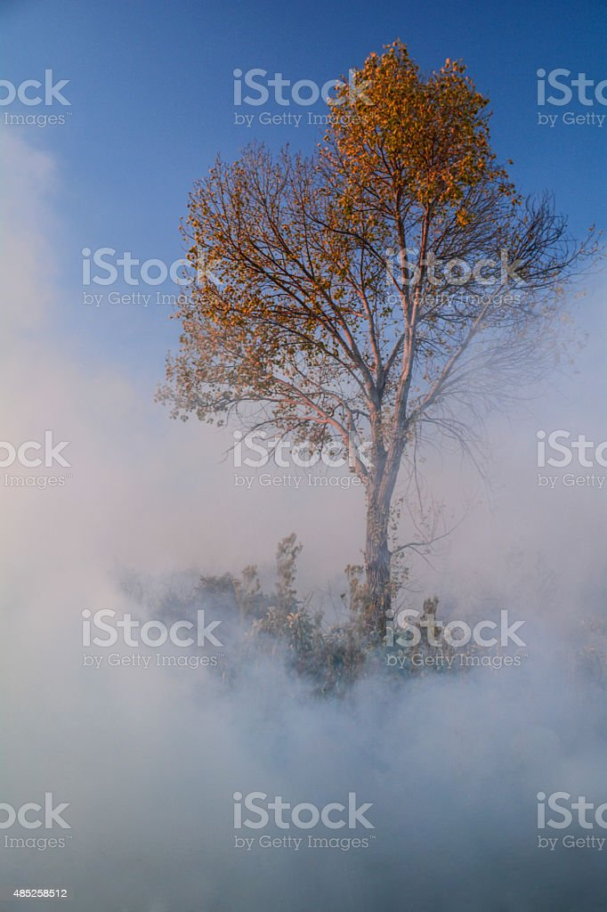 Autum Tree in a cloud of smoke royalty-free stock photo