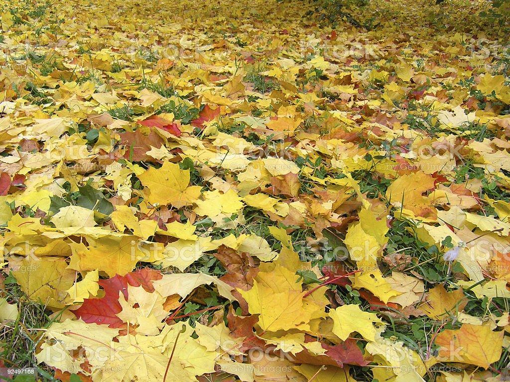 Autumn [1] royalty-free stock photo